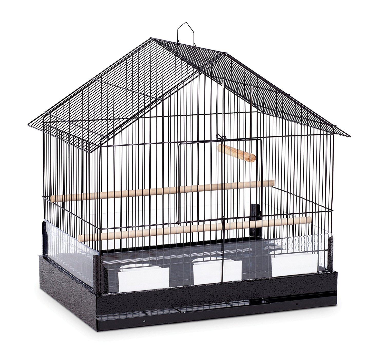 Properties Of Iron Bird Cages
